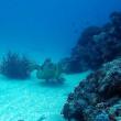 本日はケラマへ!沖縄ダイビング 那覇シーマリン
