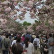 ちょこっと造幣局通り抜け「雑踏と桜のトンネル」