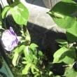 今年の天候と植物の種