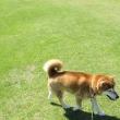 日曜日は公園でお散歩