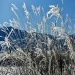 雪の下郷町 (しもごうまち・南部会津)  2017年1月13日