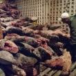 ガラパゴス諸島でサメ密猟か エクアドル当局が中国漁船を拿捕