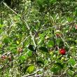 屋久島の植物