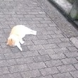 熱海のネコさん