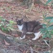 SDカードの中に猫のいい写真を見つけた!隣のテレビは「家を売る」テレビドラマがずっと流れているようだ。