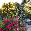花フェスタ記念公園 夜のイベント