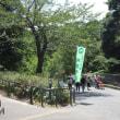 「到津の森公園」のゾウさん 180817
