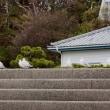 竹島へ戻ってきた海鳥たち
