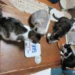 猫とシジミの日