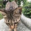 猫ちゃんを探しに@ルンピニー公園
