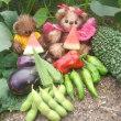 夏野菜の収穫祭