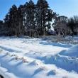 ワンコ先生と雪かき