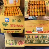 ☆庄内柿がとどきましたよ~!!☆