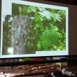 サークル日(はりぎり)アイウシ 棘の多くある木 アイヌ文様の原型