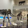 北海道博物館へ行きました〜