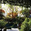 モネの庭で10
