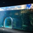九州縦断サメの旅  〜海響館は河豚と人鳥パラダイス