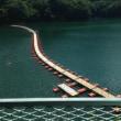 2014年8月20日(水)奥多摩湖の浮橋