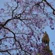 ジャカランダの咲く街