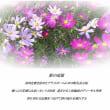 駅の追憶/秋桜