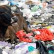 ドイツ発(datelined Germany): towards plastic bans
