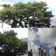 10月3日(水)今日の北川桜