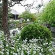 京都さくら旅(2)
