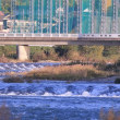 ●晩秋の犀川 大橋、桜橋、下菊橋、上菊橋、雪見橋など