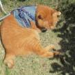 花の季節の猫散歩