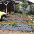 家庭菜園2018