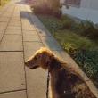 早朝散歩。