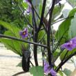 水戸の野菜の花