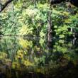 【Nov_14】紅葉の気配が秋の湖面