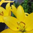 < 雨の道に咲く花 >