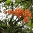 9月の花 キツネノカミソリ