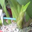 寒さをものともせずに育つ謎の蘭     追記です