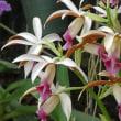 温室の花 (4)