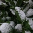 初めての積雪