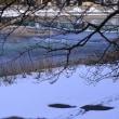 ●雪の犀川 アオサギ 上菊橋 下菊橋 桜橋 犀川大橋