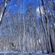 森のゼミ その2