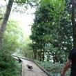 奥日光~、不整地ラン!!トレイルラン!!ロードラン!!湖畔散歩もね!!