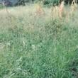菜園は 今   草の楽園