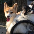 我が家の犬達