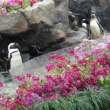 上野へパンダを見に行きました。でも、雪でした。