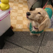 ペット、セラピー犬