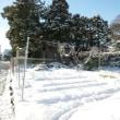 2018年1月25日(木)、雪景色