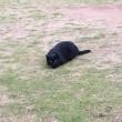 東山は、猫の多い地域です。一時流行病で減少しましたが、最近は復活。