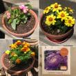 春から夏の花たち