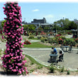 茨木のええとこ(^^♪市の花であるバラ そのバラのいい香りにつつまれた「若園公園バラ園」