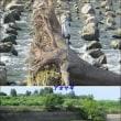 久しぶりの淀川